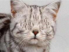 cat no eyes 2