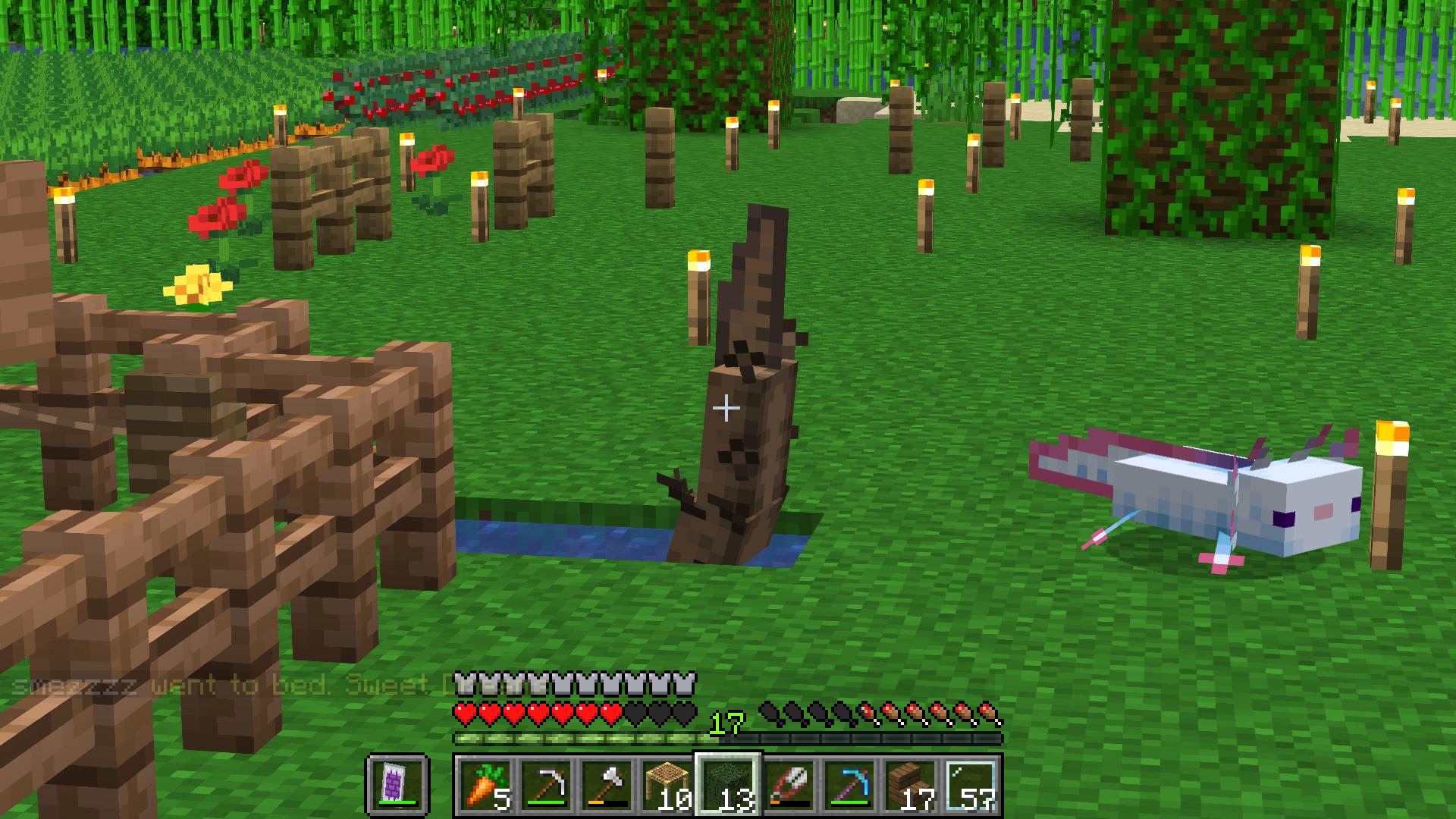 axolotl 👍👍👍👍